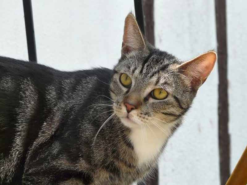 Kater Tom  / © TSV Bad Arolsen (D.N.)
