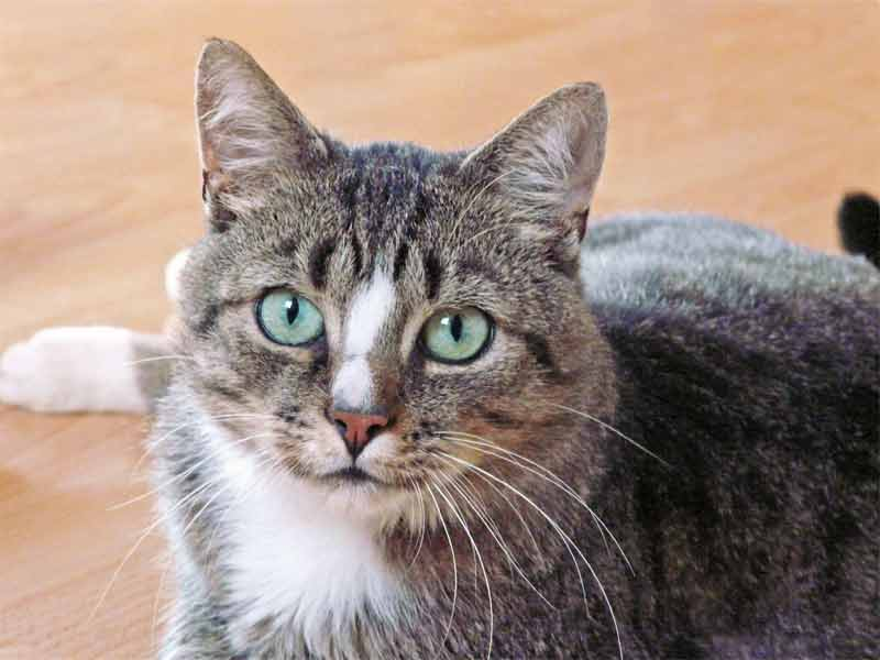 Kater Whisky  / © TSV Bad Arolsen (D.N.)